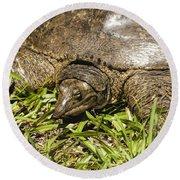 Florida Soft Shelled Turtle - Apalone Ferox Round Beach Towel