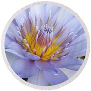 Soft Mauve Waterlily Round Beach Towel