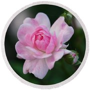 Soft Pink Miniature Rose Round Beach Towel by Rona Black