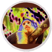 Solarized White-faced Monkey Round Beach Towel