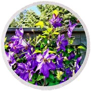 Solina Clematis On Fence Round Beach Towel