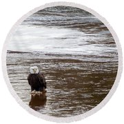 Solitary Eagle Round Beach Towel