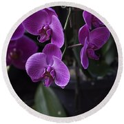 Some Very Beautiful Purple Colored Orchid Flowers Inside The Jurong Bird Park Round Beach Towel