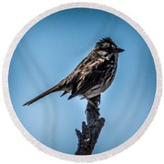 Song Sparrow On Top Of Branch Round Beach Towel