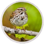 Song Sparrow Pictures 132 Round Beach Towel