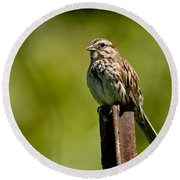 Song Sparrow Pictures 135 Round Beach Towel