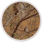 Song Sparrows Round Beach Towel