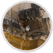 Sophisticated Baroque Bird Perch Round Beach Towel