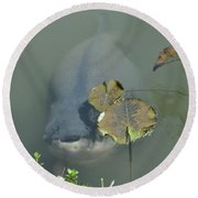 #south American Pacu Round Beach Towel