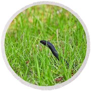 Southern Black Racer Round Beach Towel by Al Powell Photography USA