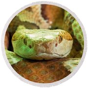 Southern Copperhead Round Beach Towel