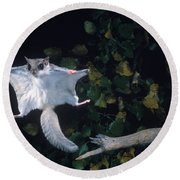 Southern Flying Squirrel Round Beach Towel by Nick Bergkessel Jr