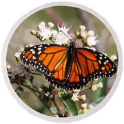 Southern Monarch Butterfly Round Beach Towel