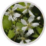 Southern Sawtooth Highbush Blackberry Blossoms - Rubus Argutus Round Beach Towel
