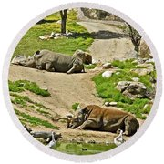 Southern White Rhinoceros In San Diego Zoo Safari Park In Escondido-california Round Beach Towel