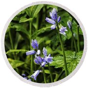 Spanish Bluebells Round Beach Towel