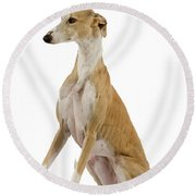 Spanish Galgo Round Beach Towel