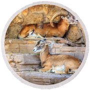 Spanish Ibex Round Beach Towel
