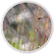 Sparkling Morning Sunshine With Dragonfly Round Beach Towel