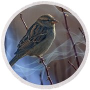 Sparrow In A Weave Round Beach Towel