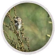 Sparrow In The Weeds Round Beach Towel