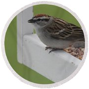 Sparrow On Feeder Round Beach Towel