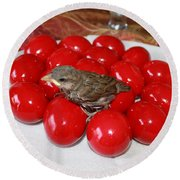 Sparrow On Red Eggs Round Beach Towel