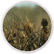Sparrow Watch  Round Beach Towel