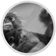 Spectacled Langur Family Round Beach Towel