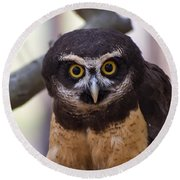 Spectacled Owl Round Beach Towel