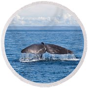 Sperm Whale Tail  Physeter Catodon Round Beach Towel