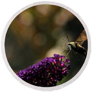 Sphinx Moth On Butterfly Bush Round Beach Towel