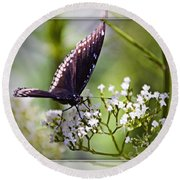 Spicebrush Swallowtail Butterfly Round Beach Towel