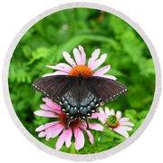 Spicebush Swallowtail Butterfly Round Beach Towel