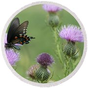 Spicebush Swallowtail Butterfly On Bull Thistle Wildflowers Round Beach Towel