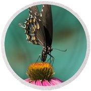 Spicebush Swallowtail Butterfly - Papilio Troilus Round Beach Towel
