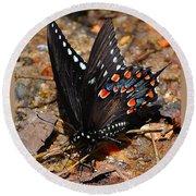 Spicebush Swallowtail Butterfly Preflight Round Beach Towel