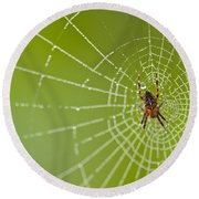 Spider Web With Dew Drops With Spider On Web Round Beach Towel