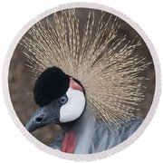 Spikey Feathers-closeup Round Beach Towel