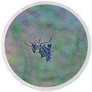 Spined Micrathena Orb Weaver Spider - Micrathena Gracilis Round Beach Towel