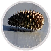 Spiny Reflections Round Beach Towel