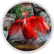 Splish Splash - Red Ibis Round Beach Towel