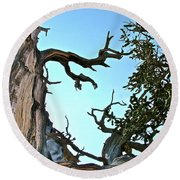 Spooky Bristlecone Pine At Spectra Point On Ramparts Trail In Cedar Breaks National Monument-utah  Round Beach Towel