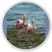 Spoonbills At The Shore Round Beach Towel