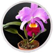 Spotlight On Purple Potted Cattleya Orchid Round Beach Towel