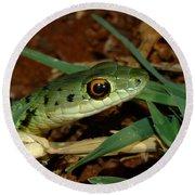 Spotted Bush Snake Philothamnus Semivariegatus Round Beach Towel