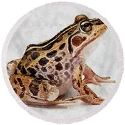 Spotted Dart Frog Round Beach Towel