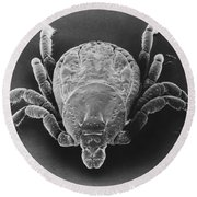 Spotted Fever Tick Round Beach Towel