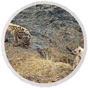 Spotted Hyena Pups In Kruger National Park-south Africa Round Beach Towel