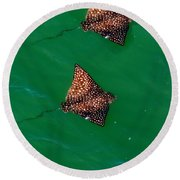 Spotted Rays  Round Beach Towel